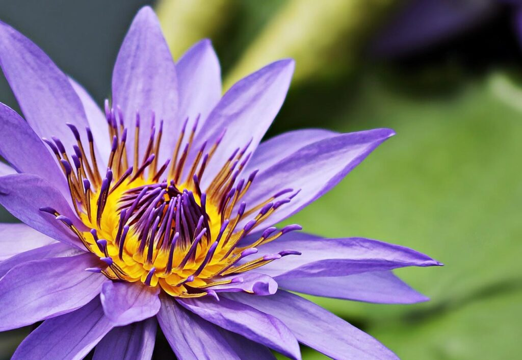 Reiki-Healers-Lounge-Blossoming-Health